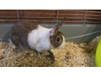 LOVELY QUIET BUNNY&LARGE INDOOR CAGE