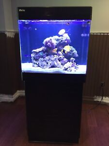 Complete saltwater reef system - 34 Gallon
