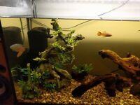 Fish Tank 3ft full set up plus extras