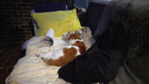 White and Orange Cat lost on North side Fredericton