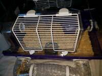 Roborovski Dwarf hamster with cage