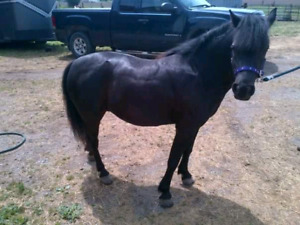 Ponies for your next event or bday, your place or ours!