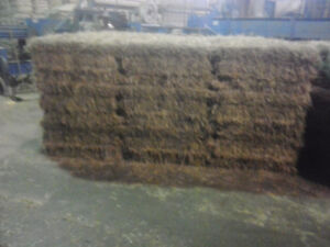 Hay for sale   Many different blends