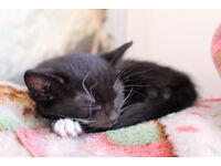 Kitten is looking for a new home