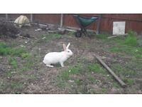 5 rabbit for sale