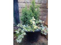 Garden flowers in the pot