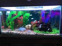 Aquarium 54 litres