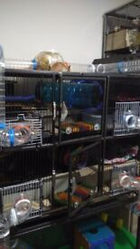 Rat ferret hamster degu metal cage on stand, two floors, excellent condition.