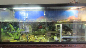 2 Turtles with Complete 120 Gallon Tank and Accessories