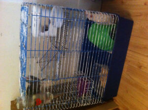 2 lg male rats with cage,dishes,etc