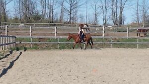 10 year old ottb for sale