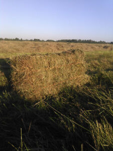 HAY FOR SALE: GRASS BLEND - SMALL SQUARE BALES