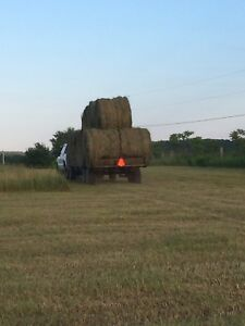 Dry first cut hay for sale