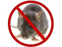 Pest Control Mice Bedbugs Ants Cockroaches Exterminator 100% Same DAY
