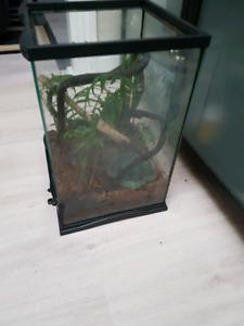 3 anole lizards
