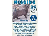 My cat Wobble has escaped; he got out around the 18/7/17.