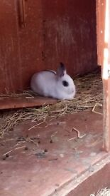 Young male bunny rabbit