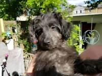 Super cute pompoo pup