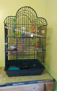 Large Parrot Cage + Accessories + 6 Varied Colored Budgies