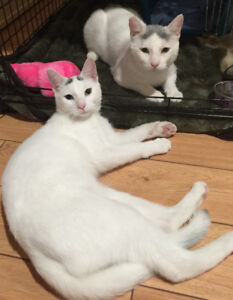Unique male cats need a loving home