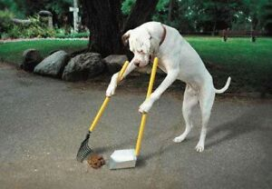 Dog Obedience Training, REAL QUALITY RESULTS!