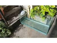 100l fish tank vivarium