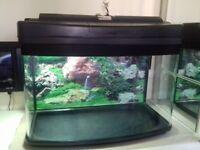 Fish Tank, great as fry tank or starter tank.