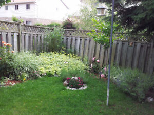 Walkout Basement Apartment in Ajax for rent