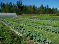 CSA farm offering fresh veggies delivered to your door for 2018