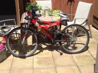 Adult Bikes for Sale