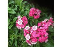 6 varieties of perennial and Biennial flowering