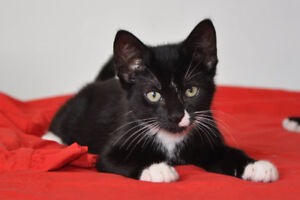 CAPS - Loving cats & kittens from a cage-free rescue