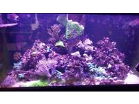 Marine fish tank Aqua one 400 with cabinet and sump