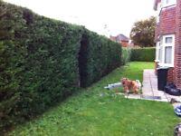 GARDEN SERVICES- grass, hedges, turfing, fencing etc
