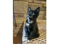 Kitty looking for a new loving home