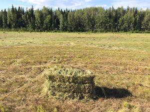 2017 horse hay 50 bales left