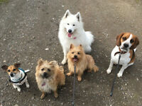 Colwick Frolics: home-from-home doggy daycare & canine care services