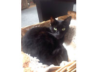 i have a 6 year old black cat look to rehome her as we are moving and cant take her with us