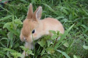 bunny/rabbits
