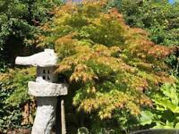 Landscape / garden designer required