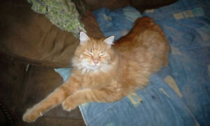 Two cats missing in Desboro