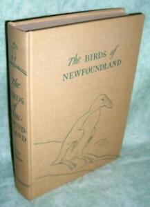 The Birds Of Newfoundland (1951)