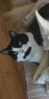 Missing Mio the Female Cat
