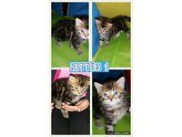 3 stunning kittens for sale