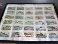 Collectable old cigarette cards