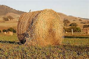 Looking for hayland/pasture to bale