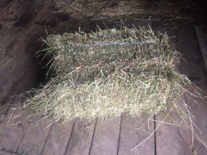 FOR SALE: 2017 SMALL SQUARE HAY BALES