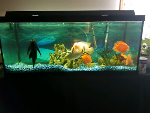 80 Gallon Aquarium with Canister Filter