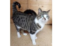 Beautiful Jake looks for a new home