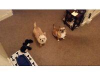 Looking for a regular dog walker Monday-Thursday
